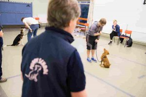 Owner teaching puppy to sit as Puppy School tutor observes during puppy training classes