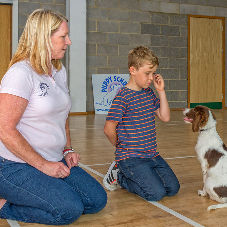 Puppy School tutor coaching young boy to train his Spaniel puppy to give eye contact